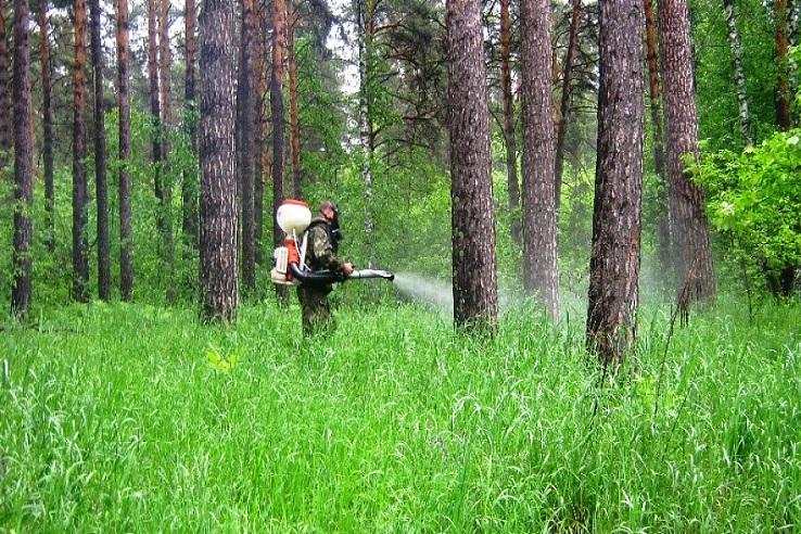 Обработка от клещей лесных массивов в Москве